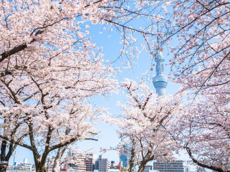 桜近いマンション サムネイル